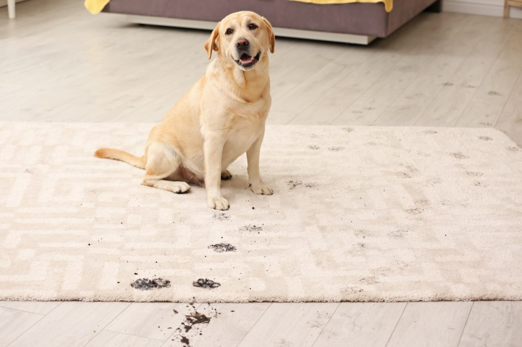 Rug Materials in a Home with Pets | Noble Floors LLC