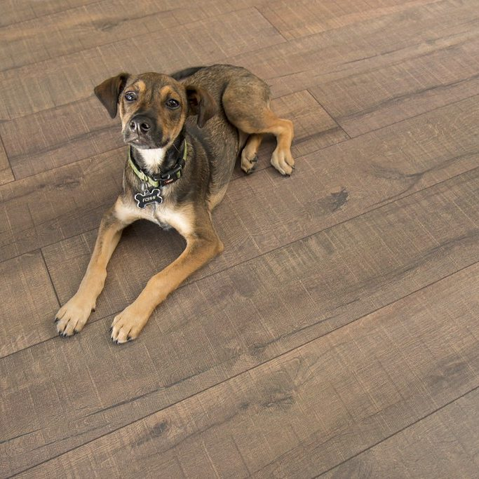 Petfriendly Cork flooring | Noble Floors LLC