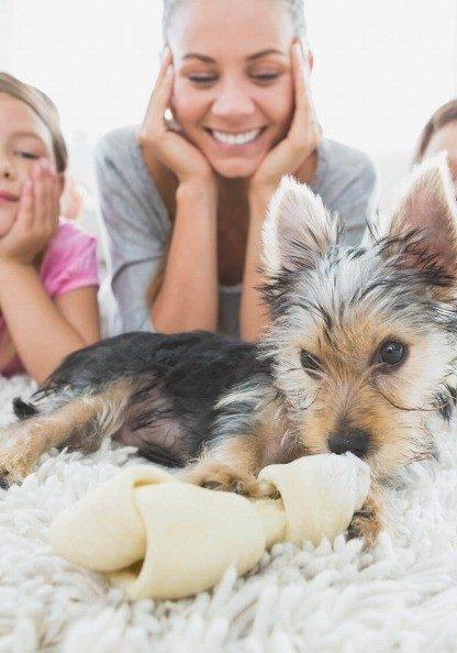 Pet on rug | Noble Floors LLC